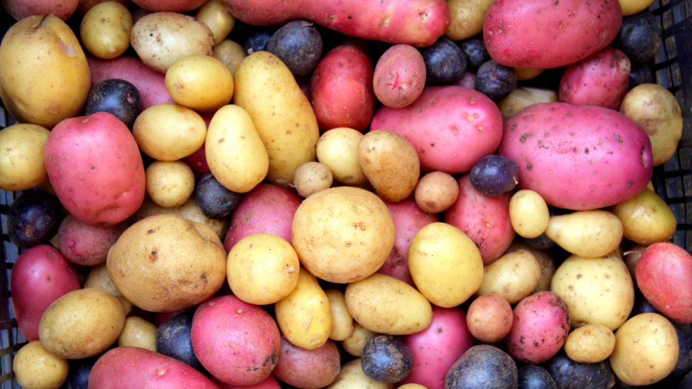 Variety of regular potatoes